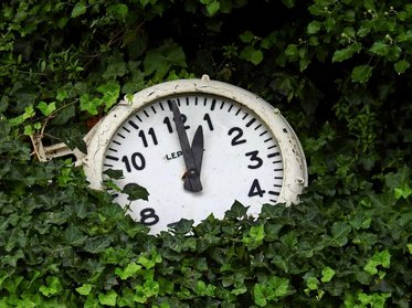 Photo of old clock surrounded by greenery
