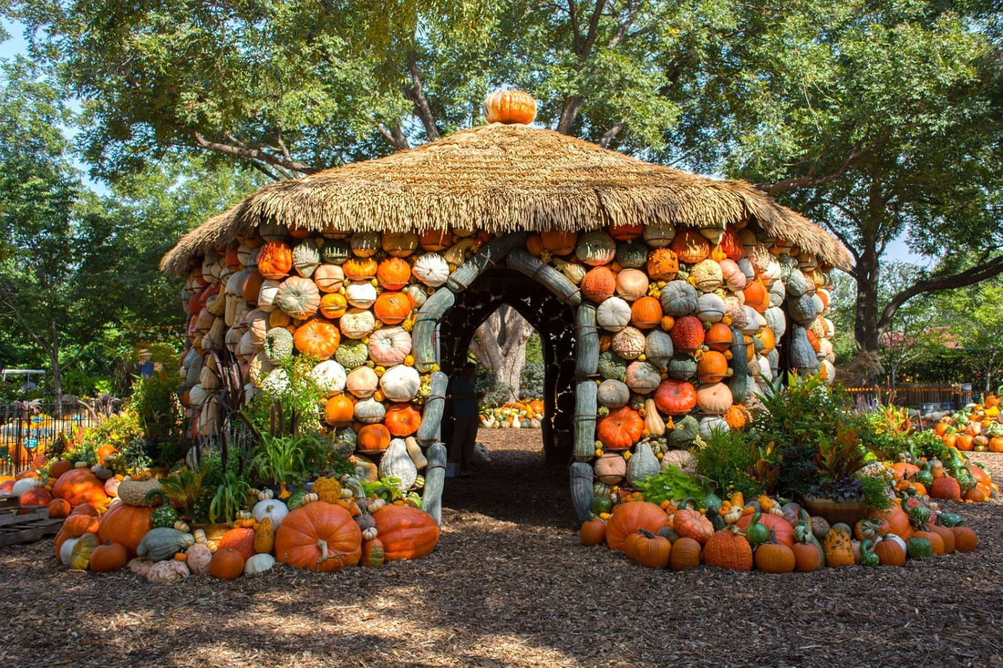 Photo of small building covered in pumpkins, squash and gourds